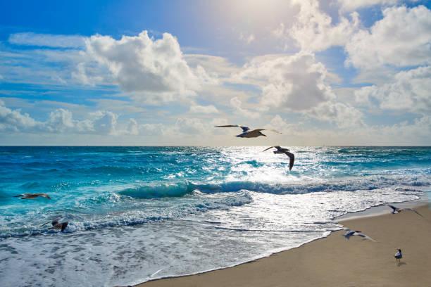singer island strand van palm beach florida ons - zanger vogel stockfoto's en -beelden