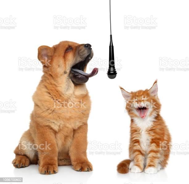Singing cat and dog on white background concept picture id1056700602?b=1&k=6&m=1056700602&s=612x612&h=btjgwqhuog2qh43q j5zolofnmslsbnpphh7iico za=