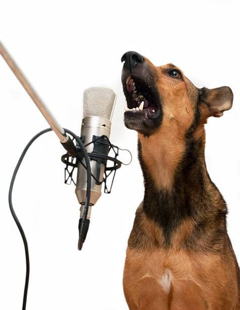 Singing Dog with Microphone stock photo