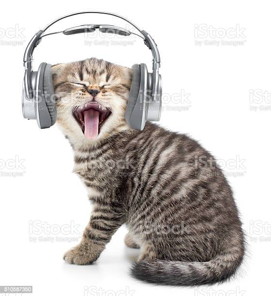 Singing funny cat or kitten in headphones listening music picture id510587350?b=1&k=6&m=510587350&s=612x612&h=xrjoc uya1 x1vjzjout 7znoer6tlso9q9ndlfxt9u=