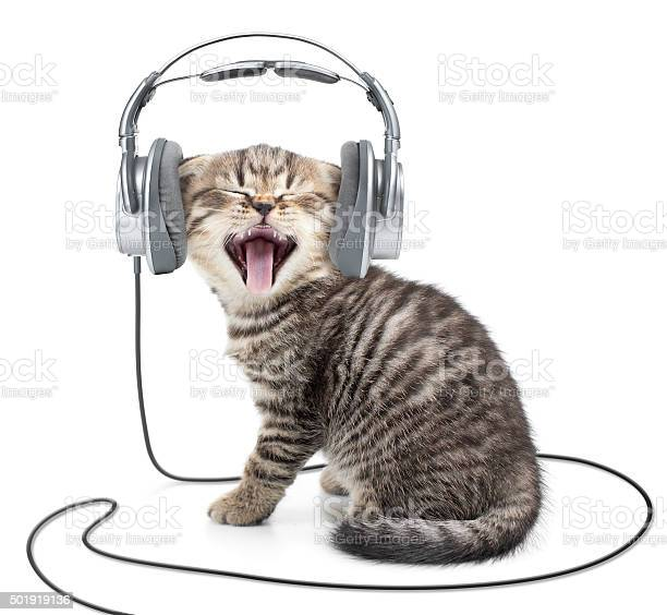Singing kitten cat in wired headphones listening to music picture id501919136?b=1&k=6&m=501919136&s=612x612&h=tswe2kpxmgtqy2nu hr8d yhvktqrd 1fckxa9vs9ra=