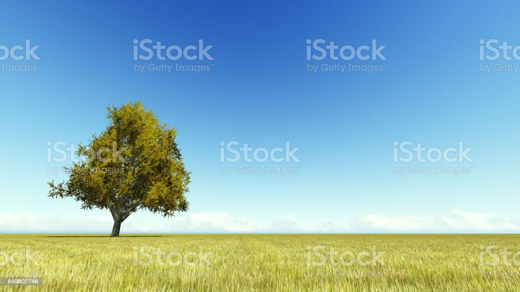Singl autumn tree on a meadow 3D render stock photo