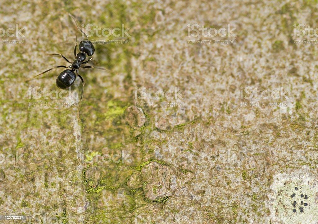 single ant royalty-free stock photo
