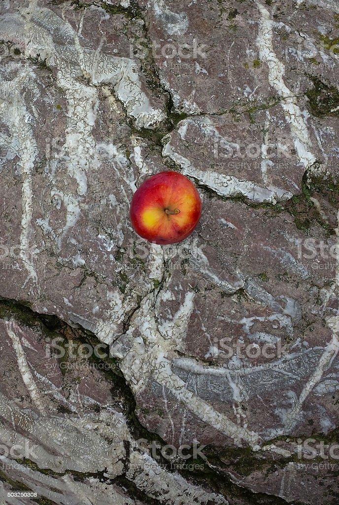 single apple on stone stock photo