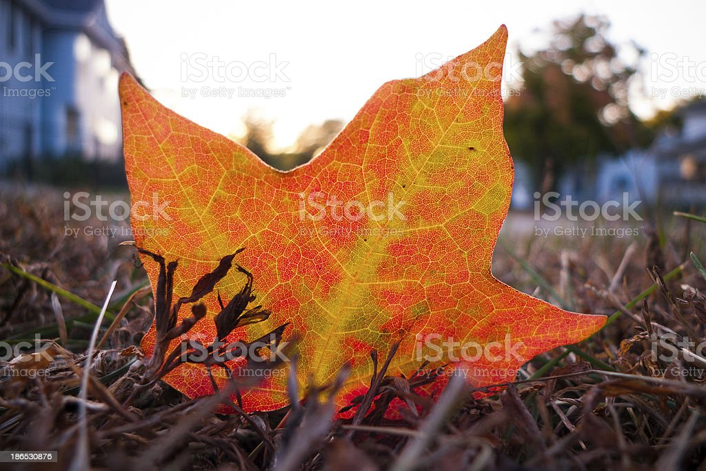 Single Autumn leaf in neighborhood stock photo