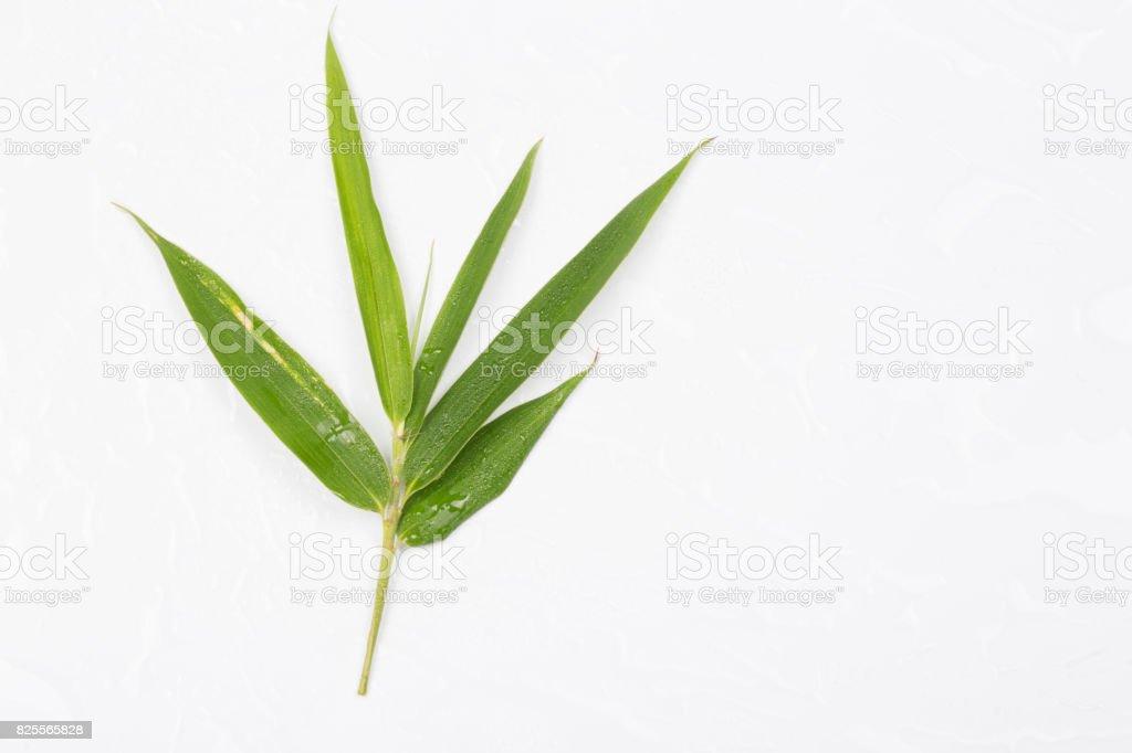 Single bamboo leaf isolated on white background stock photo