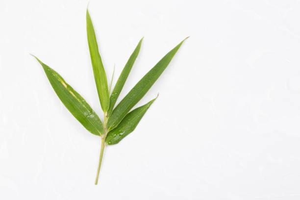 Einzelne Bambusblatt isoliert auf weißem Hintergrund – Foto