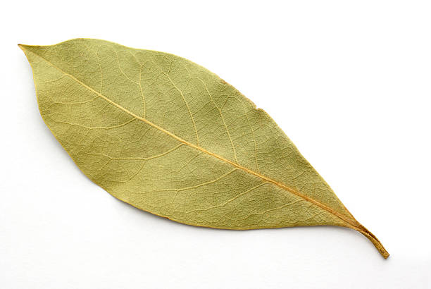 single bay leaf on white single bay leaf on white bay leaf stock pictures, royalty-free photos & images