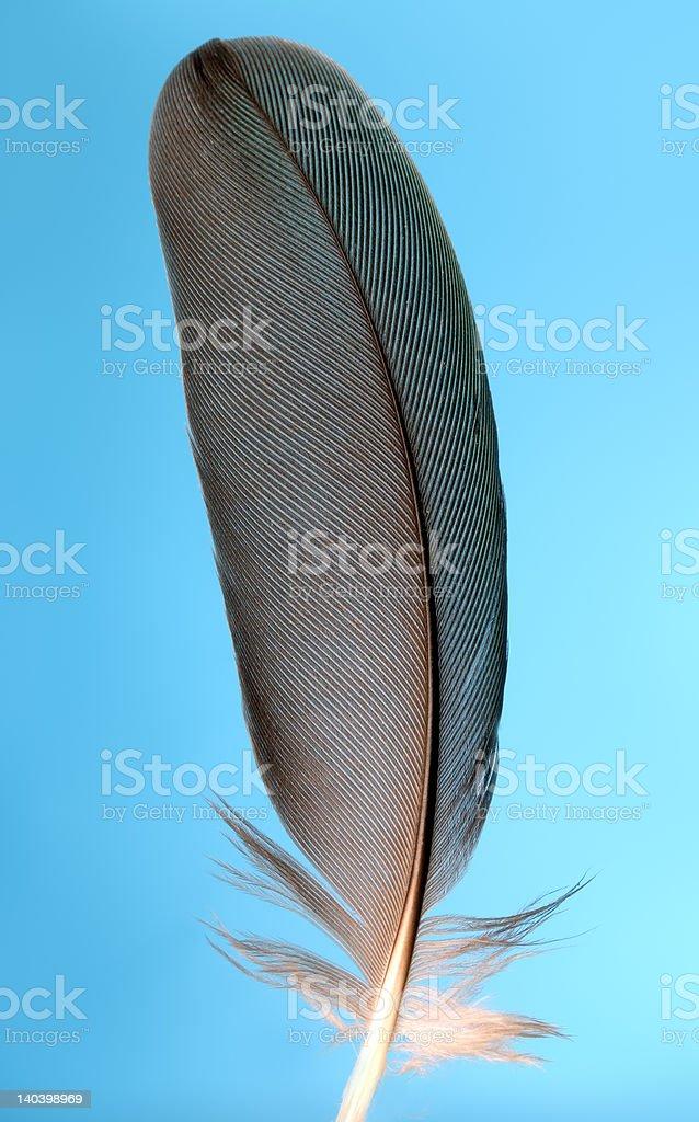 single black feather royalty-free stock photo