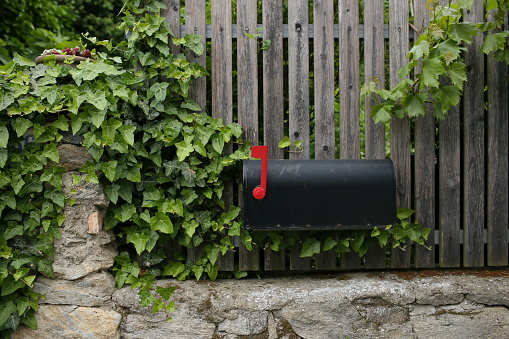 Single Black Mailbox Sits On Of A Wooden Fence Grape Leaves Or Vine Stock Photo - Download Image Now
