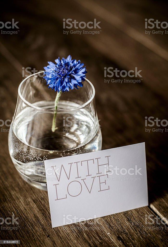 Single Blue Cornflower - Centaurea cyanus stock photo