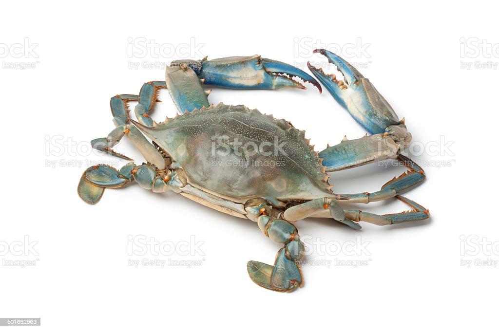 Single blue crab stock photo