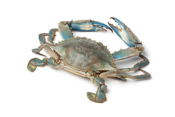 single blue crab - blauwe zwemkrab stockfoto's en -beelden