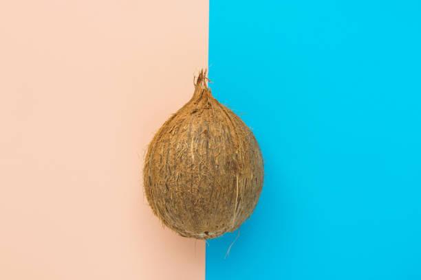 Eine braune Kokosnuss auf duotone Pfirsich-rosa Minzblaugrat. Kreatives Lebensmittel-Plakat. Sommer Tropenurlaubsspaß-Konzept. Gesundes Thema der Ölhaut. Kopierplatz – Foto