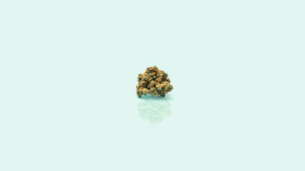 Single Cannabis Bud Single Cannabis Bud on mirror surface bud stock pictures, royalty-free photos & images