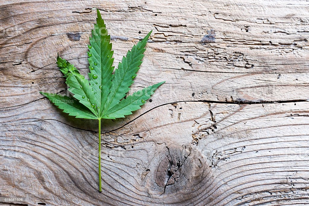 Single cannabis leaf on wooden backgorund, top view stock photo