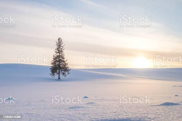 Single christmas tree under the sunset and hills of white shinny snow picture id1083644086?b=1&k=6&m=1083644086&s=612x612&h=77ryovrfuka8ns pgmc3m q7wqdunrcoujna ns53p0=