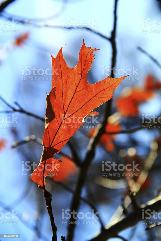 Single Close Up Brown Leaf in the Autumn Fall Season royalty-free stock photo