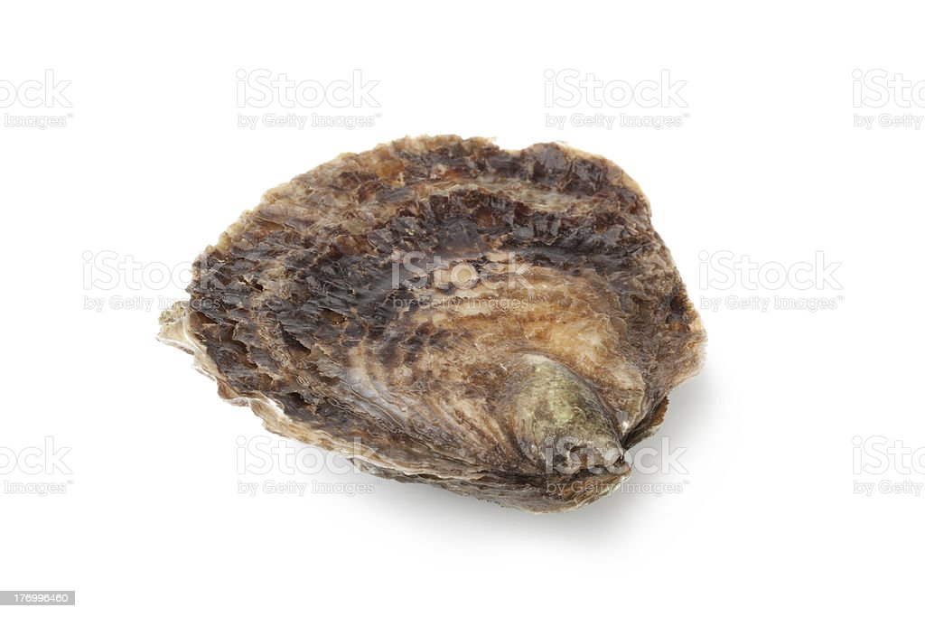 Single closed fresh European flat oyster royalty-free stock photo