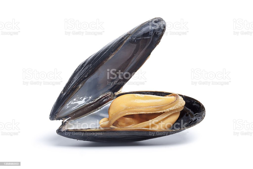 Single cooked mussel stock photo