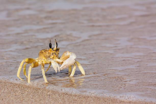 Eine einzelne Krabbe an der Wasserkante – Foto