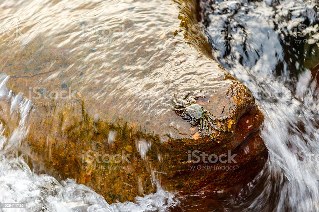 Single crab perched on rock with waves retreating below stock photo