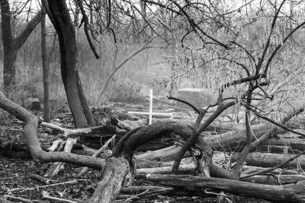 Single Cross in the Woods in Black and White stock photo