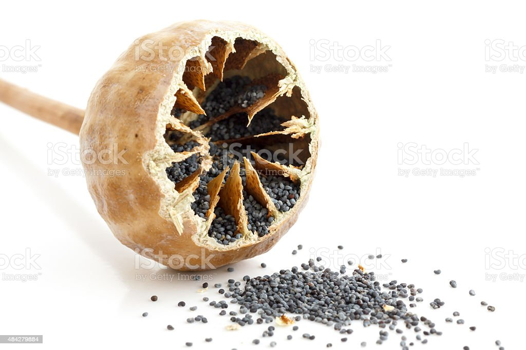 Single Cut Open Poppy Seed Pod Stock Photo Download Image Now