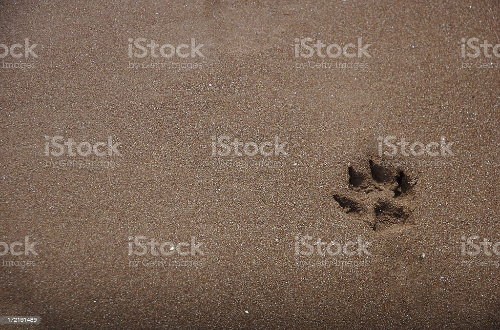 Single Dog Paw Print in Brown Sand stock photo
