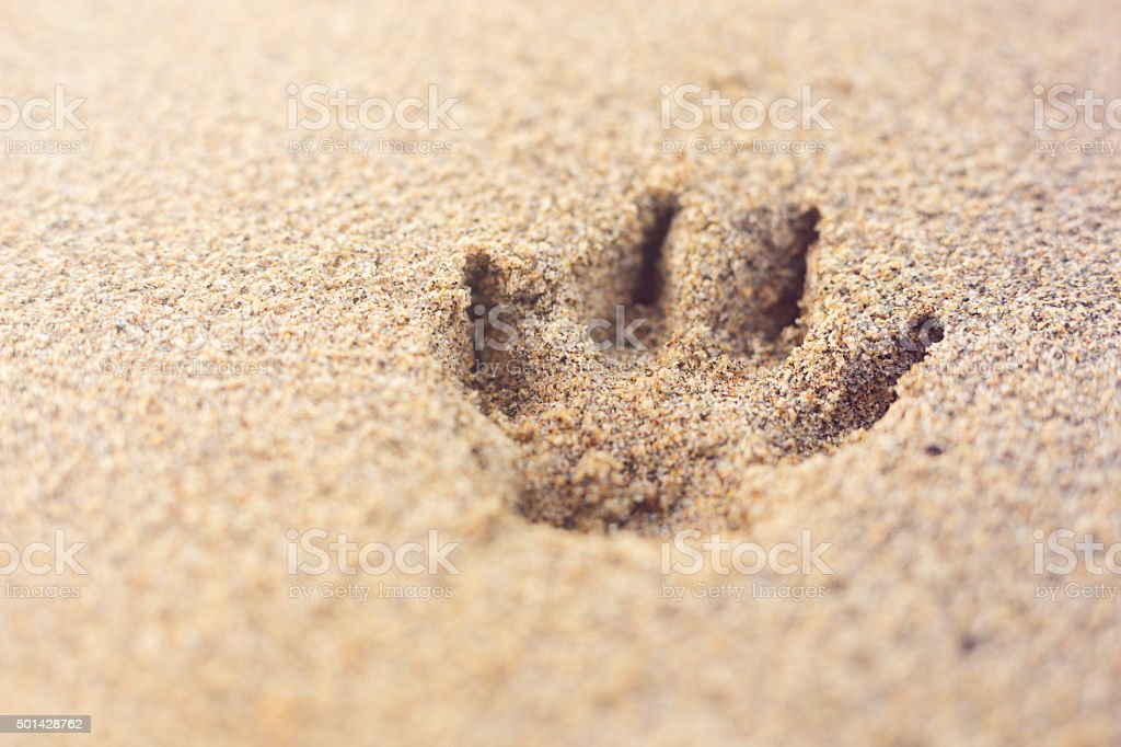 Single dog paw print in sand, beach stock photo