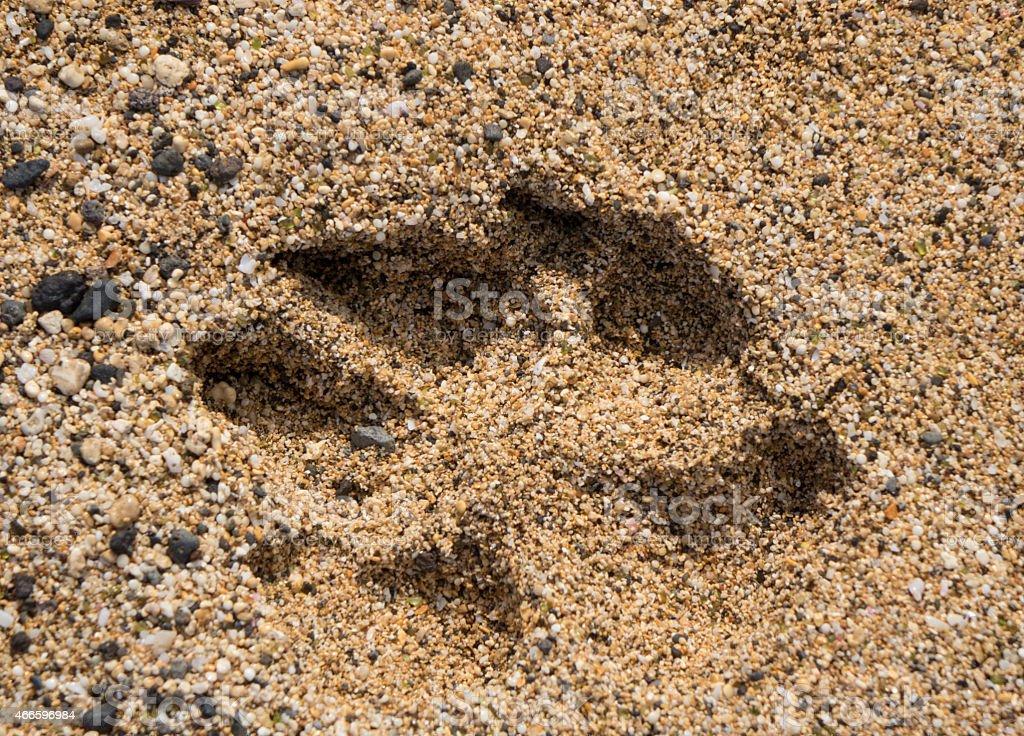 Single dog paw print in sand stock photo