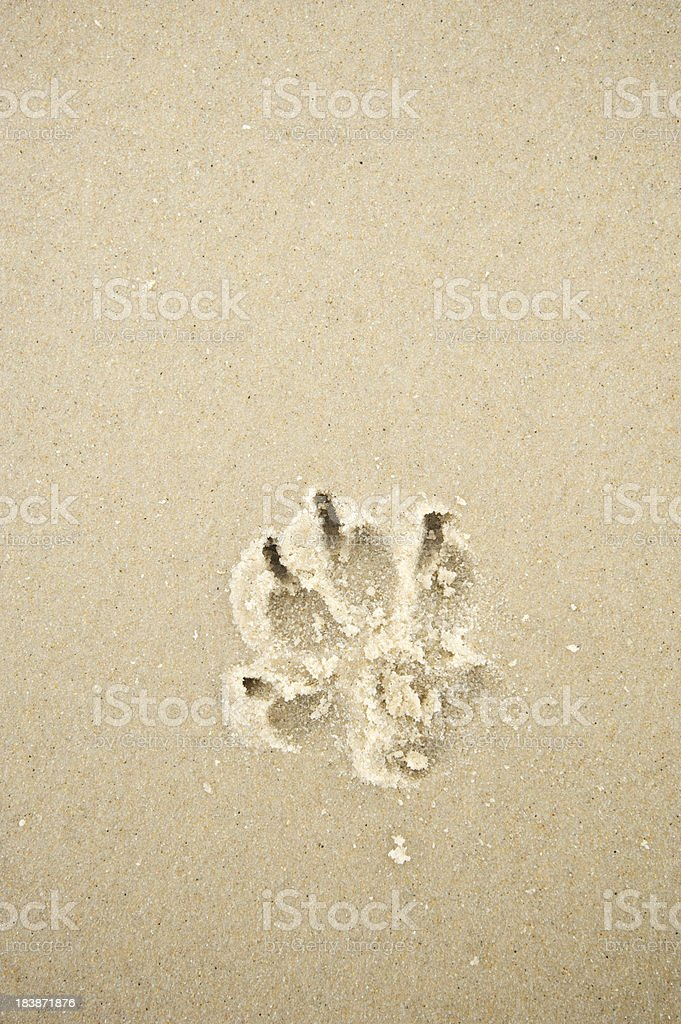 Single Dog Paw Print in Textured Wet Sand royalty-free stock photo