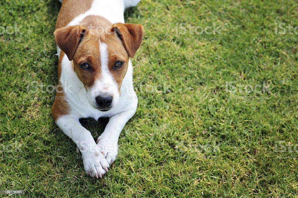 Single dog stock photo