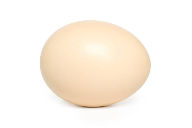 single egg with shadow stock photo