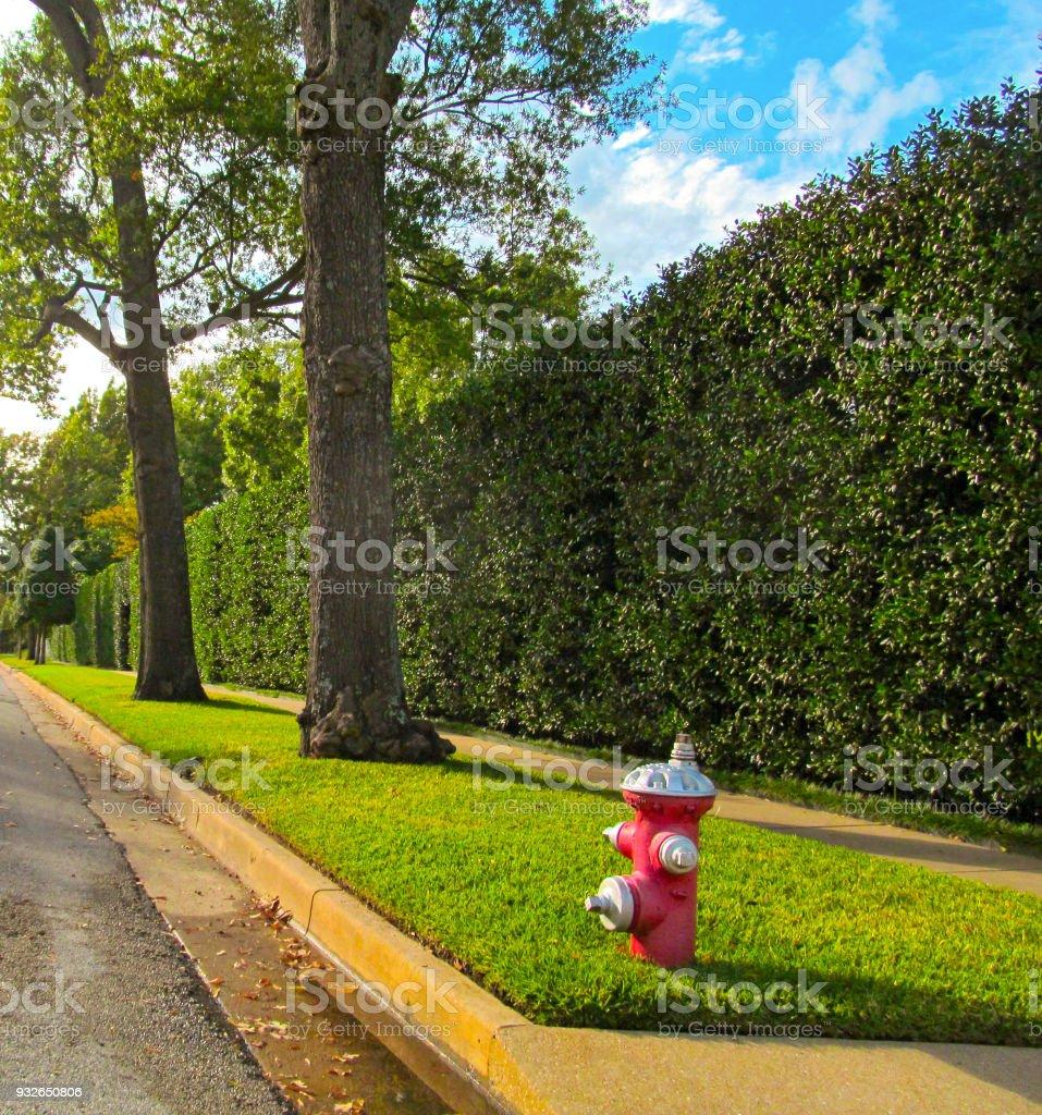 Shrubs Green Fence