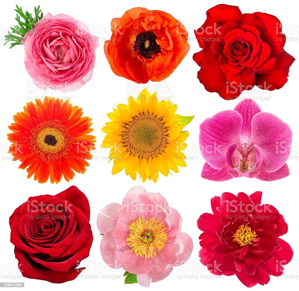Single flower heads. Rose, orchid, peony, sunflower, gerber stock photo