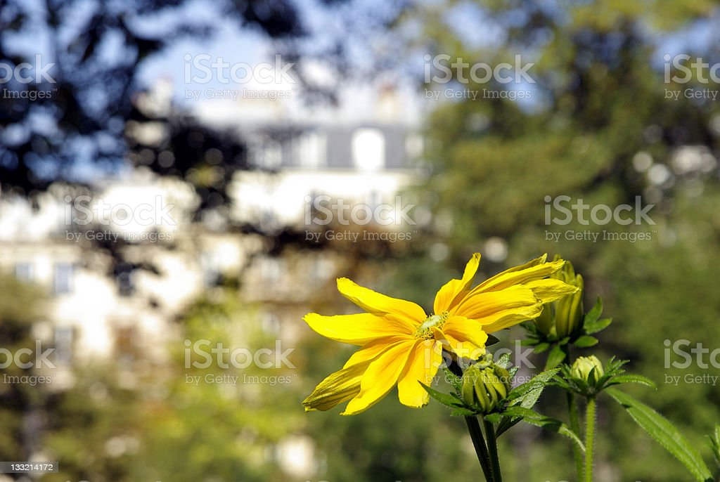 Single flower in the city stock photo
