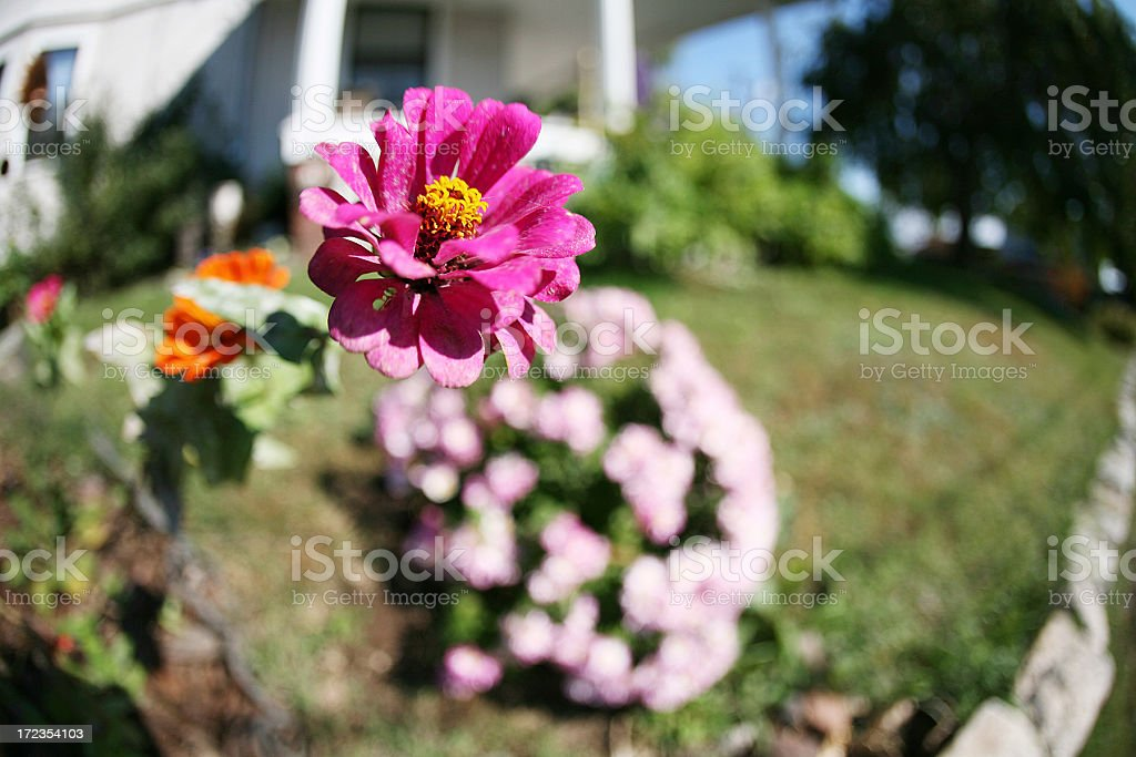 single flower royalty-free stock photo