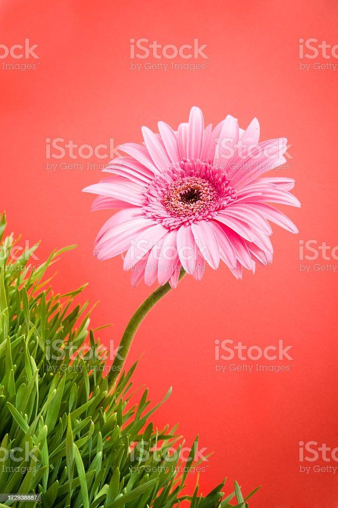 single flowers royalty-free stock photo