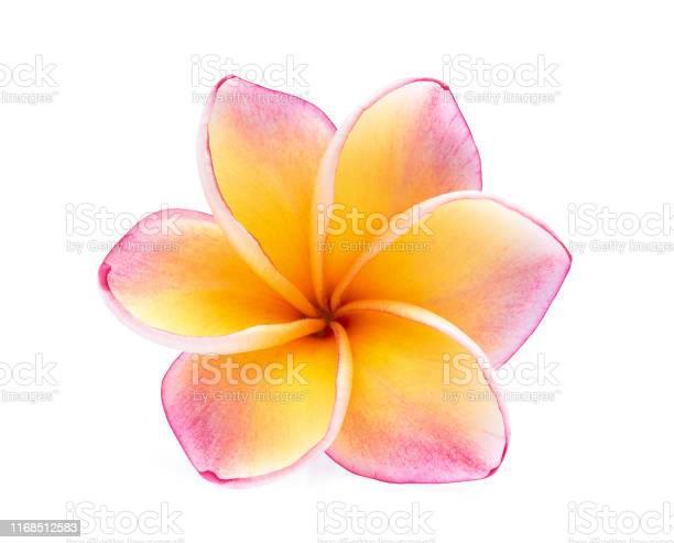 Single frangipani flower isolated on white background picture id1168512583?b=1&k=6&m=1168512583&s=612x612&h=s2rcjk9jnm6ynl2e9abi6ux4hfjb ms efwbqypdrhu=