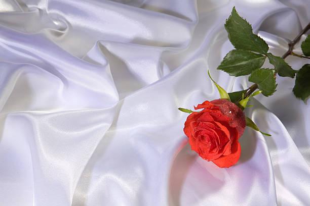 Eine frische schöne Rote rose auf weiß silk.XXXL – Foto