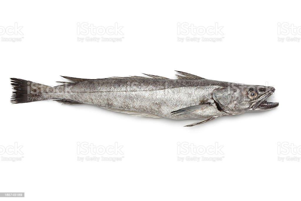 Single fresh Hake fish stock photo