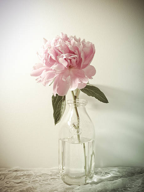 Royalty Free Bottle Flower Vase Single Flower Pictures Images And