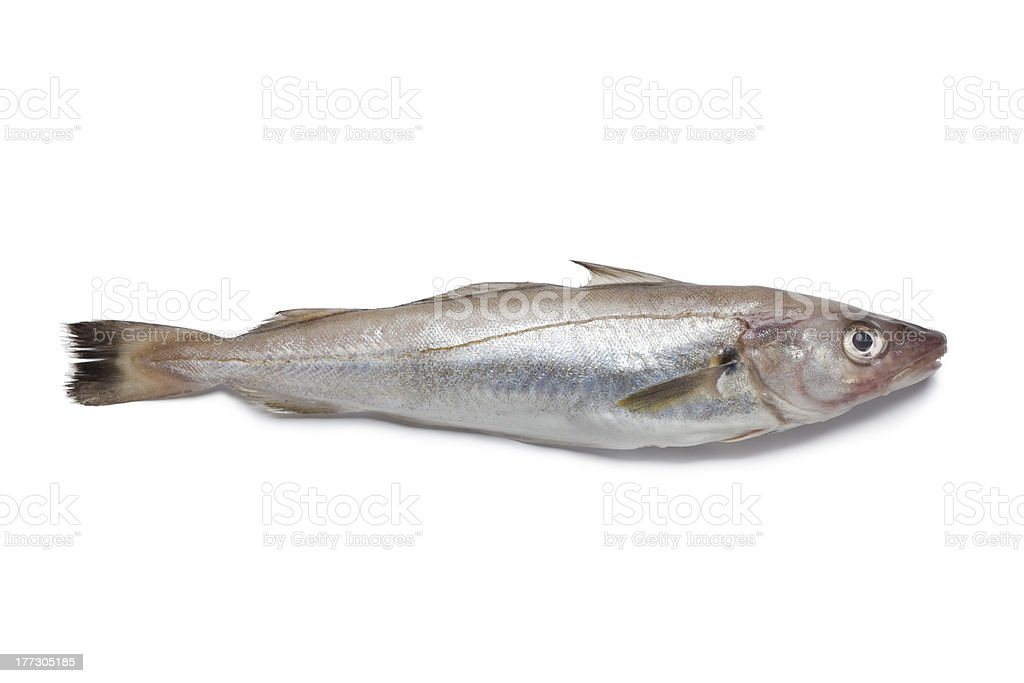 Una fresca whiting - foto de stock