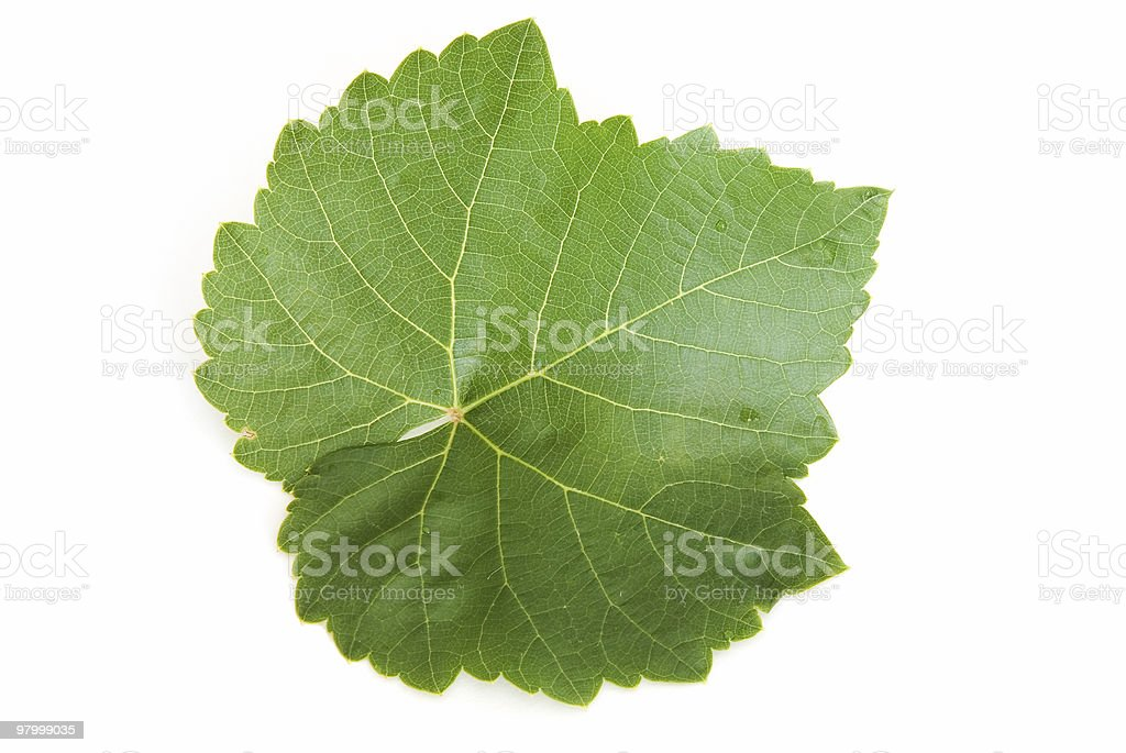 Single grape leaf on white royalty-free stock photo