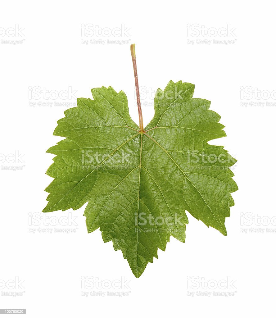 Single green grape leaf on a white background royalty-free stock photo