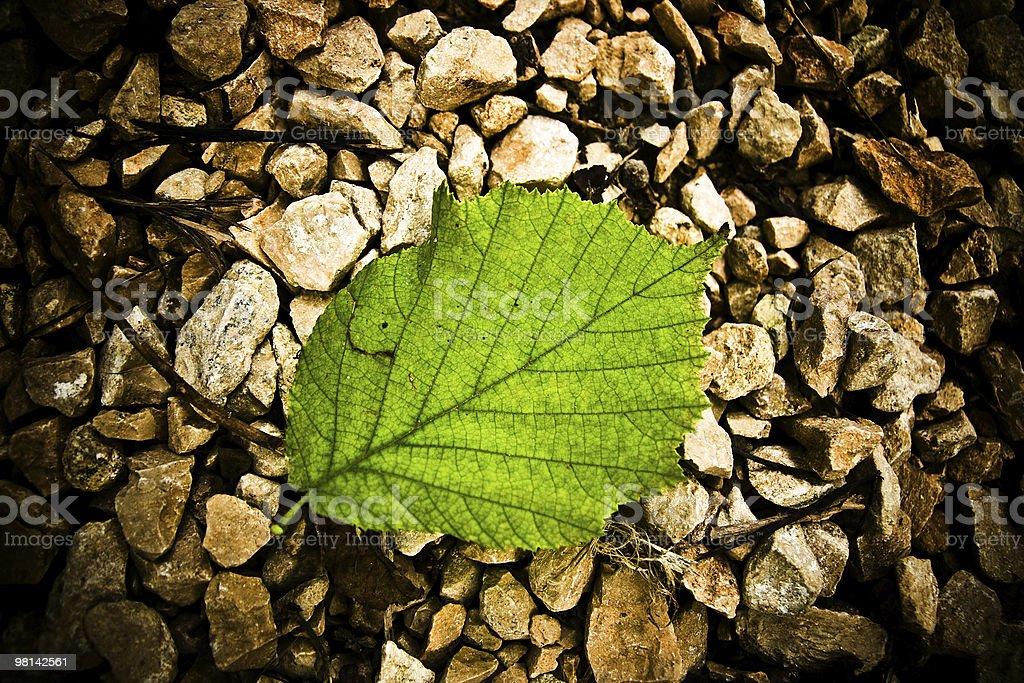 Foglia verde singolo foto stock royalty-free