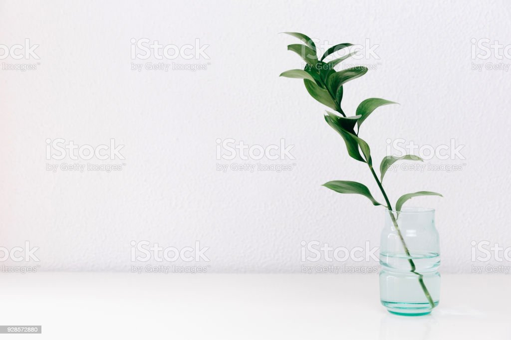 Single Green Leaf Plant In Vase On White Background Concept And