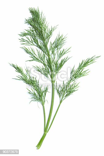 One branch of dill with a central, thicker light green stem and two slender ones at the sides isolated on a white background.  At the top of each stem, there are numerous finely divided leaves.