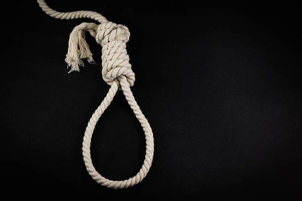 single hangmans noose in white rope on black - noose stock photos and pictures